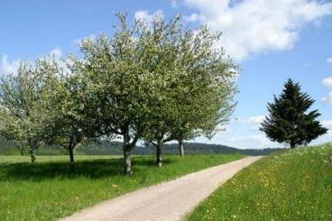 Wald Michelbach mit einer Draisine erleben